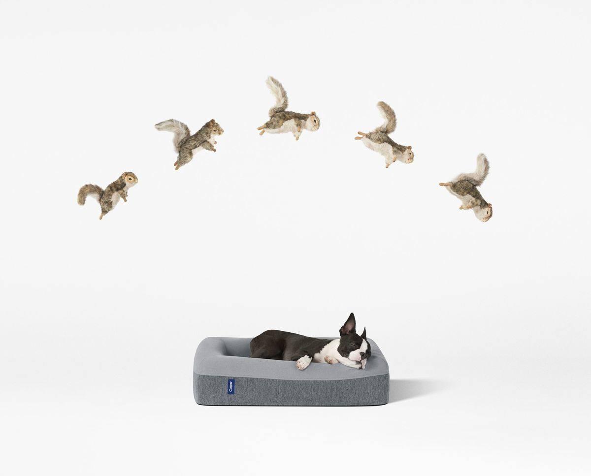 casper vermarktet jetzt auch matratzen f r hunde w v. Black Bedroom Furniture Sets. Home Design Ideas