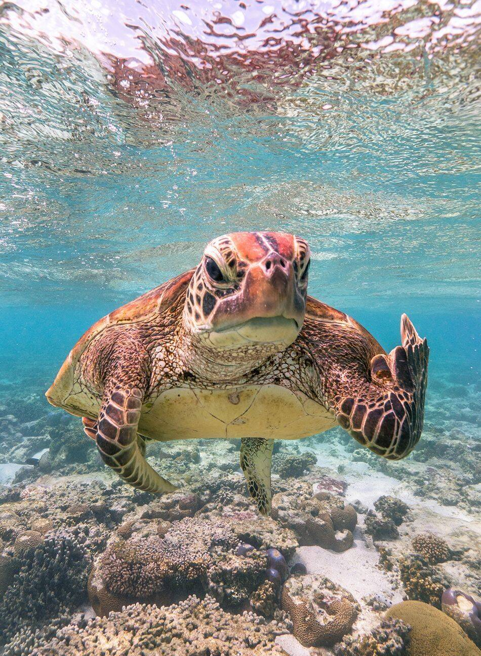 "Titel: ""Terry the Turtle flipping the bird""."