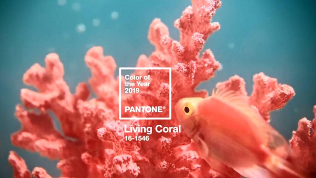 Pantone Kürt Living Coral Zur Trendfarbe 2019 Wv